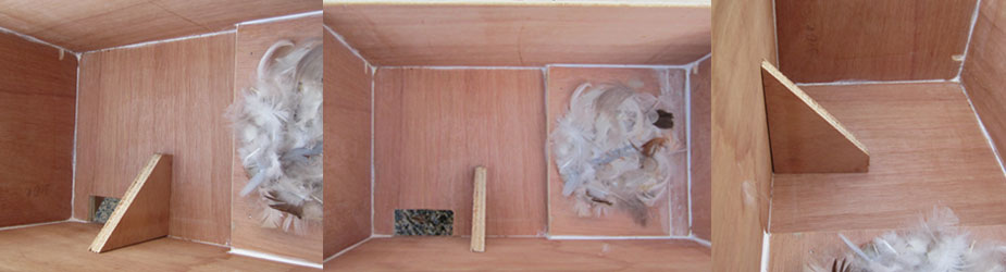 2016 swift nest box close-up